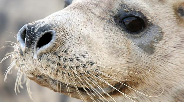 Protected seals in Northern Ireland were decapitated and possibly shot, it has been revealed