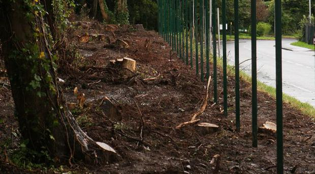 Trees removed and fence being errected at the gates to Palace Barracks.Picture : Mark McCormick. 10/09/10