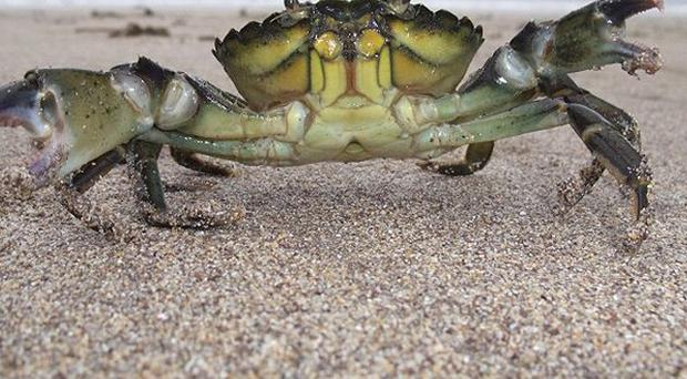 The photo of a common shore crab won the adult category in the 2010 National Heritage Week Photography Competition
