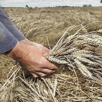 Russia may extend its ban on grain exports until next July