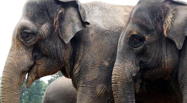 Indian police arrested five people as they smashed an elephant-smuggling ring in Assam