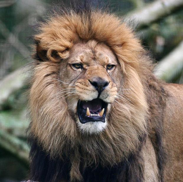 Lions attacked and killed a tourist showering at a campsite in Zimbabwe