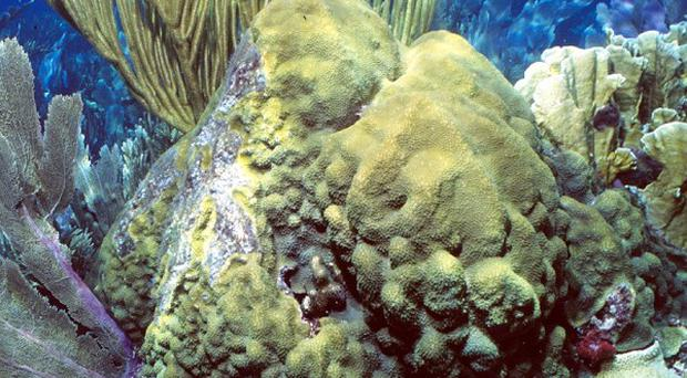 Scientists found damage to deep sea corals several miles from where BP's blown-out well into the Gulf of Mexico