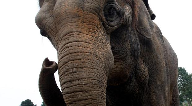 An elephant has trampled a boy to death in southern Vietnam