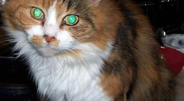 Jazz, a 12-year-old cat, was allegedly deliberately pushed off a fence by two youths and attacked by dogs