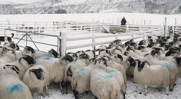 A quarter of farming households are below the povety line, the Government's rural watchdog has said