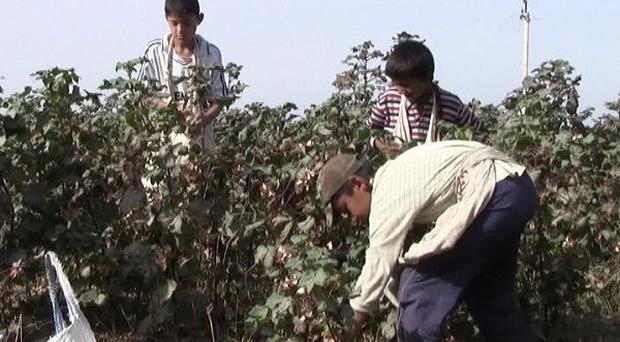 The Government was urged to investigate two British cotton traders accused of breaching international guidelines on child slavery