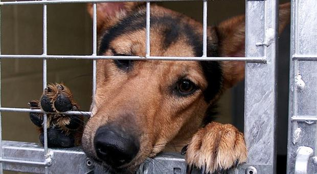 The number of stray dogs in Northern Ireland has grown to almost 6,000, according to new figures
