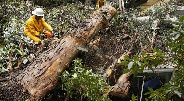 A worker removes a large tree from a home in Los Angeles after it was felled by storms (AP)