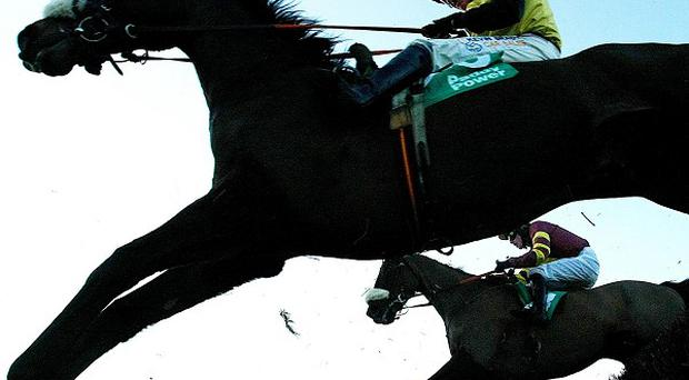Jumping at Leopardstown