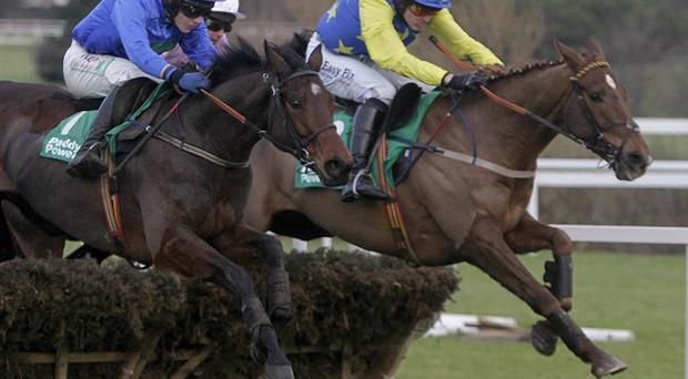 Hurricane Fly (blue) pings the last