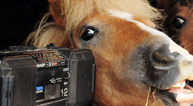Ponies Monty and George listen to the Archers on the radio