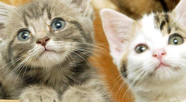 A fire at a California animal sanctuary killed more than 60 cats