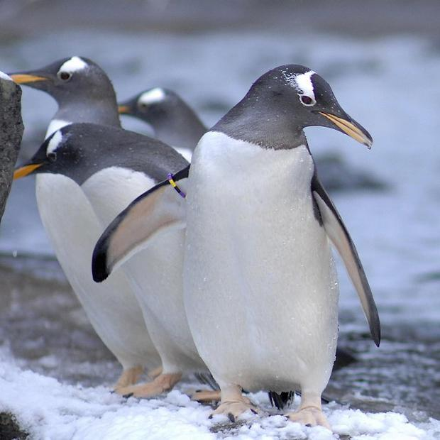 Scots have been flocking to pick up a penguin over the last 12 months, new figures revealed