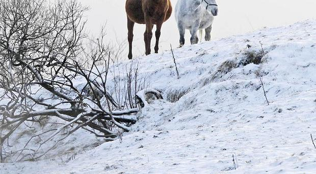 Horses grazing on snow covered mountains in Dublin after more bad weather hit the UK and Ireland
