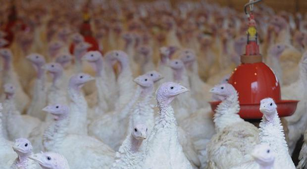 German investigators have found excessive levels of cancer-causing dioxin in chicken