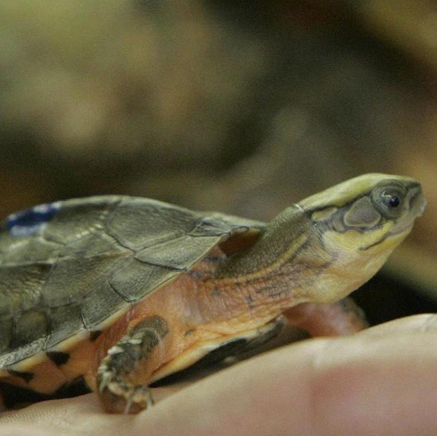 Two men have been arrested on suspicion of illegally importing turtles into the US