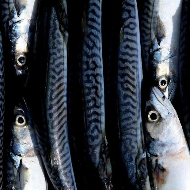 Iceland is set to be banned from landing mackerel at European Union ports in a row over catch quotas
