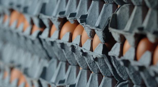German authorities have banned sales of eggs, poultry and pork from a further 934 farms
