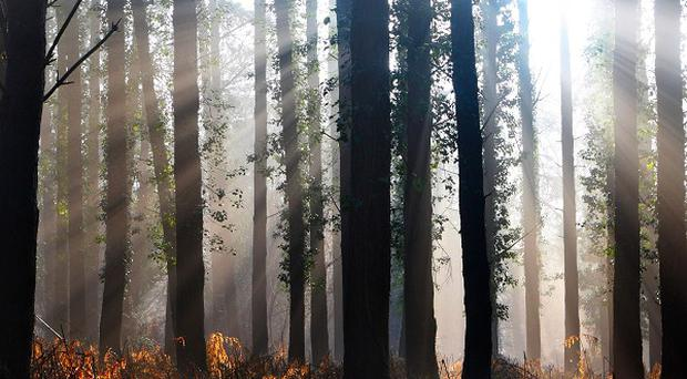 The Government has unveiled plans to sell off England's publicly owned forests