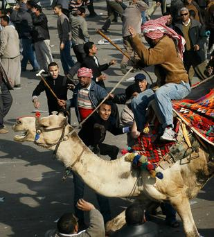 A supporter of embattled Egyptian president Hosni Mubarek rides a camel through the melee during a clash between pro-Mubarek and anti-government protesters in Tahrir Square on February 2, 2011 in Cairo, Egypt.