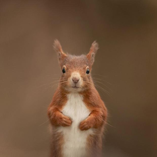 Concerns have been raised over the fate of threatened wildlife such as red squirrels under plans to sell-off forests
