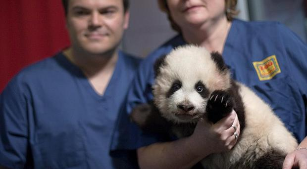 Jack Black attended the panda's naming ceremony
