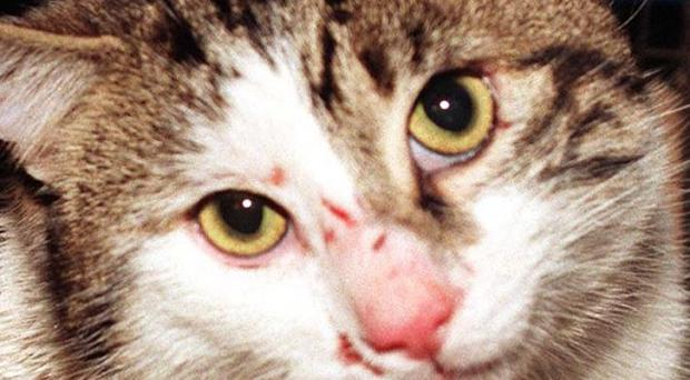 A man killed a tabby cat when he picked it up by a hind leg and repeatedly swung it head-first into a wall