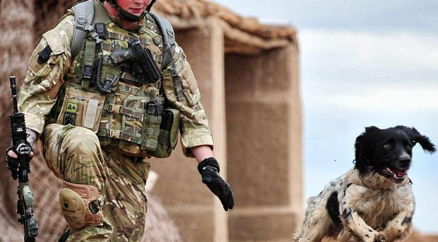 L/Cpl Liam Tasker was killed while on patrol in Helmand province and dog Theo died shortly afterwards