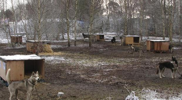 Husky dogs chained to stakes at Lapland New Forest, which was branded a con by visitors and trading standards officials