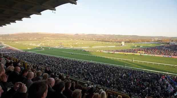 Several promising horses caught the eye at Cheltenham despite failing to win any races