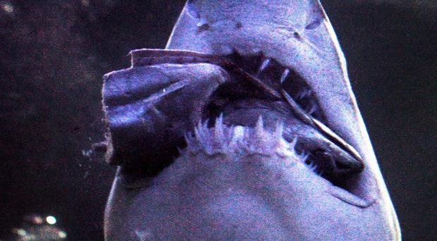 A 48-year-old surfer has been injured in the second shark attack in a week north of Sydney