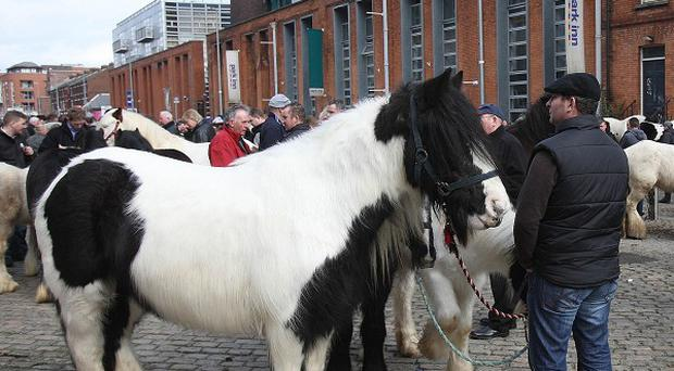 The Attorney General has been urged to close down the Smithfield horse fair