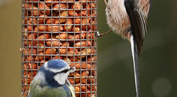 Small garden birds such as the long-tailed tit have bounced back in increased numbers