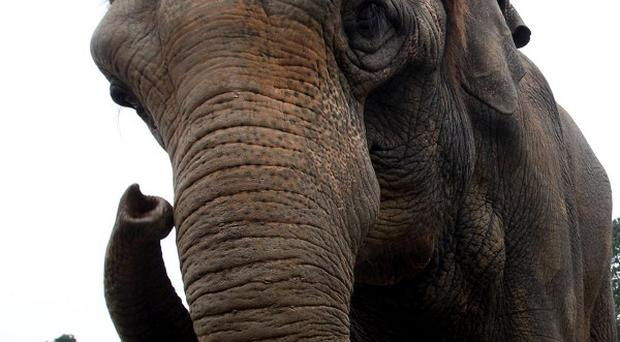 Two British tourists have been robbed during a trip to an elephant sanctuary in South Africa