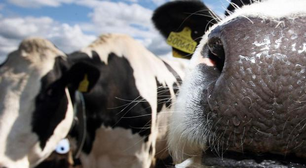 Eating less meat will reduce nitrogen pollution, a new report has said