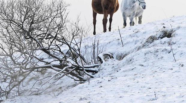 The freezing weather of December 2010 cost insurers 224 million euro, the IIF has said