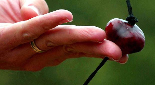 Traditional playtime games such as conkers are disappearing from school playgrounds, a survey suggests