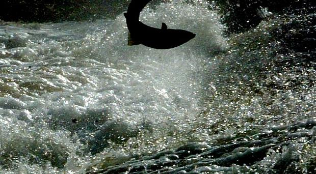 Plans for a gold mine in Alaska could threaten a salmon fishery, it has been claimed