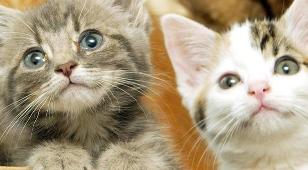 A total of 1,175 kittens were dumped, given up or born at Blue Cross adoption centres last year