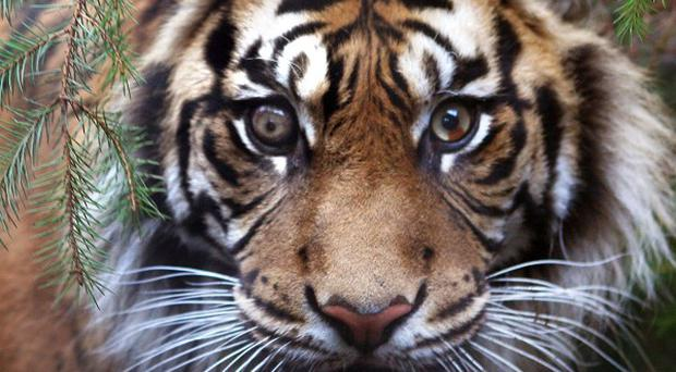 Eight tigers have been seized from a menagerie in Mexico