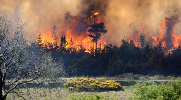Fire engulfs a forest on the Trassey Road near Bryansford, County Down