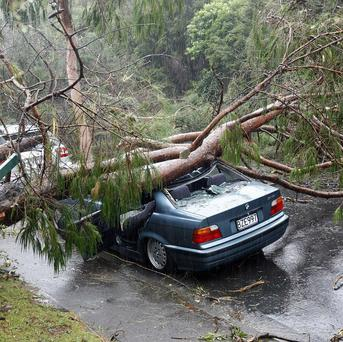 A car is crushed by a fallen tree in Auckland (AP)