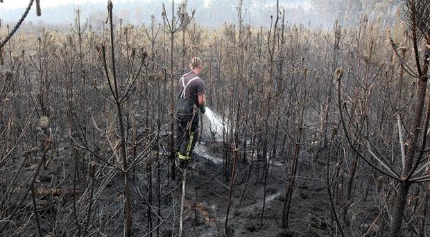 Firefighters work on a blaze in Swinley Forest, Berkshire, which has been burning for several days
