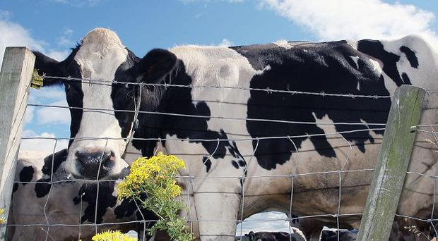 The Irish Farmers' Association said a raid on its offices was an attack on cattle owners