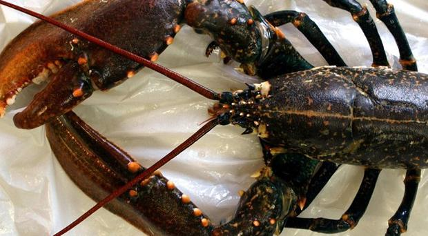 Conservationists have voiced concerns about the fortunes of lobsters after an assessment of all 248 species