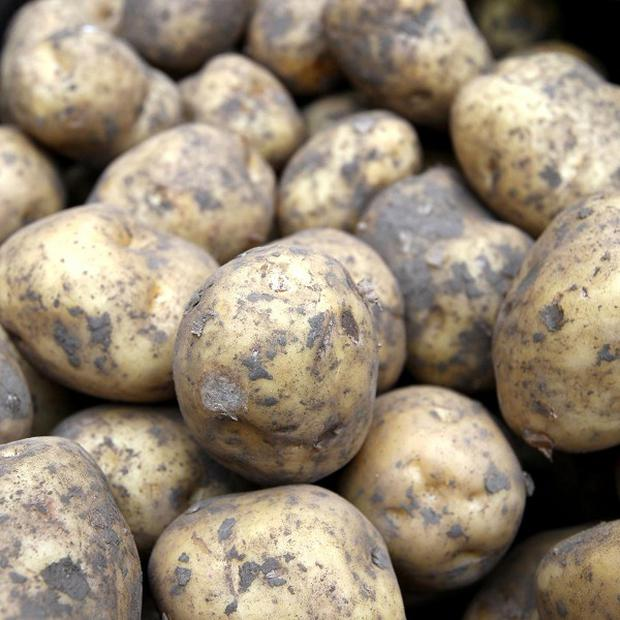 Publication of the humble potato's genetic codebook is expected to help avert hunger in the world
