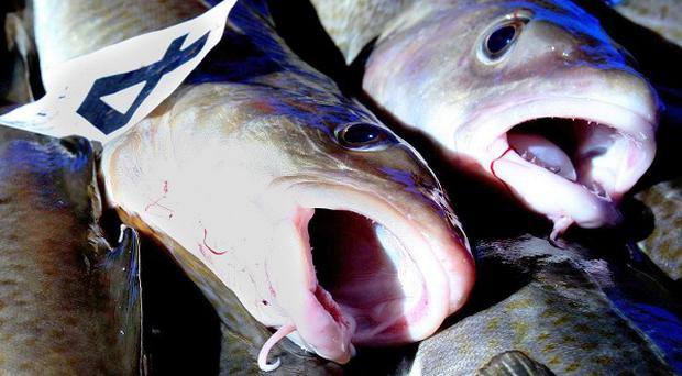 Cheaper fish is being passed off as cod, a study has found