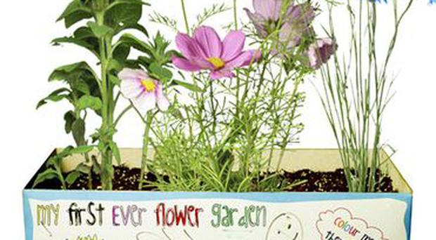 <b>JOHN LEWIS: </b>This garden box encourages children to learn about growing and caring for plants. It contains seeds for cornflower, sunflower, cosmos and nasturtium, plus wooden plant markers, a dibber and colouring pencils for the box. <b>£12.95, johnlewis.com </b>