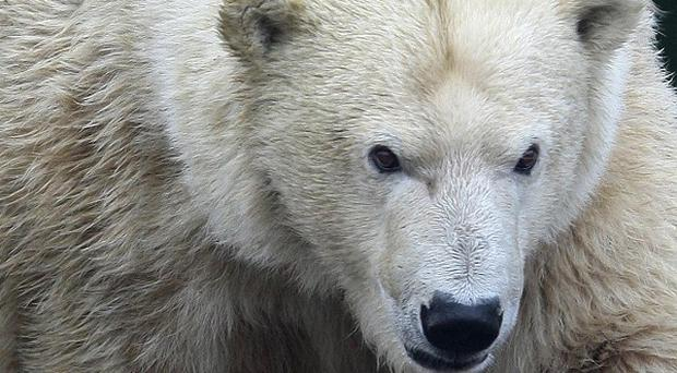 Horatio Chapple, 17, has been killed and four other people seriously injured in a polar bear attack in Norway